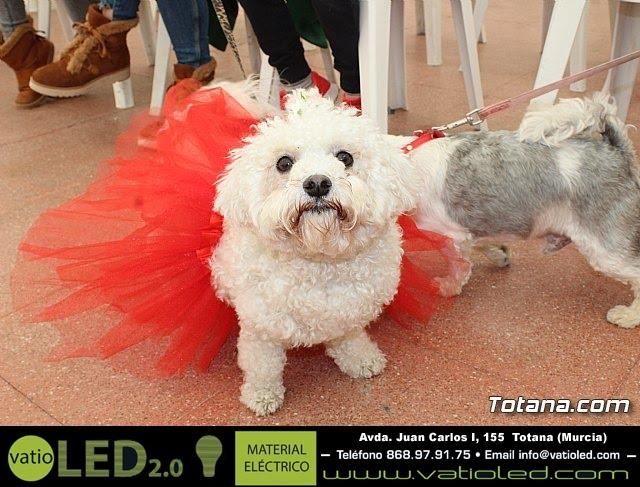 Concurso de disfraces de mascotas Carnaval de Totana - 4