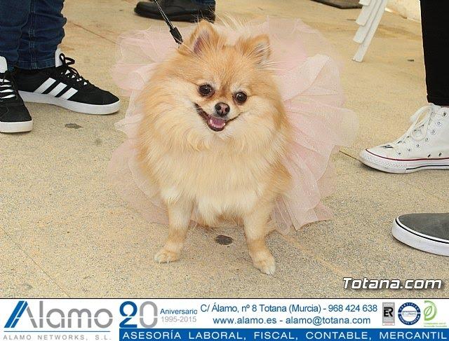 Concurso de disfraces de mascotas Carnaval de Totana - 7