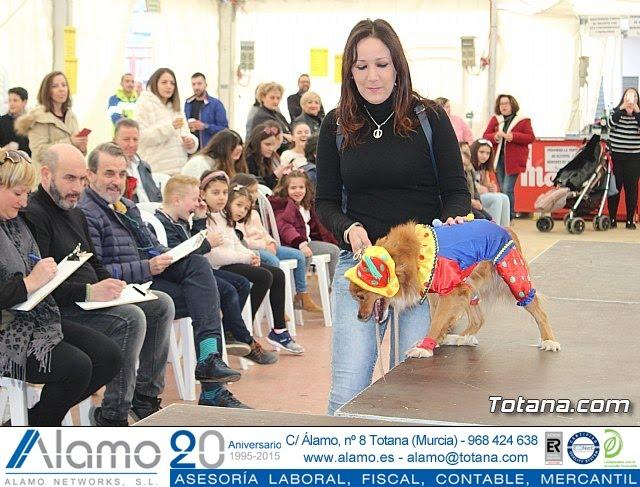 Concurso de disfraces de mascotas Carnaval de Totana - 21