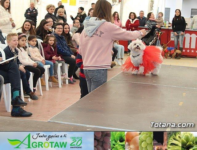 Concurso de disfraces de mascotas Carnaval de Totana - 27